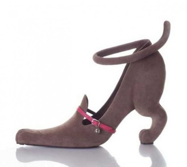 dog funny shoe pictures