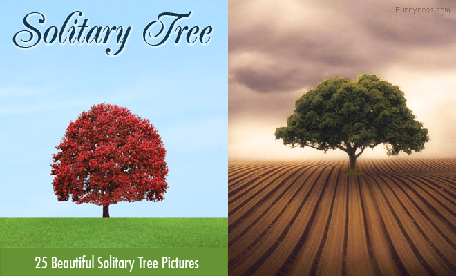 25 beautiful solitary tree photographs from around the world