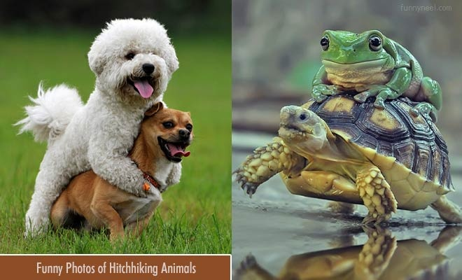 funny hitchhiking animal pictures