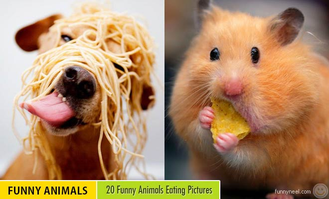 Funny Animals Eating