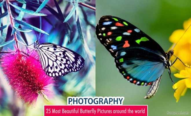 butterfly pictures around the world