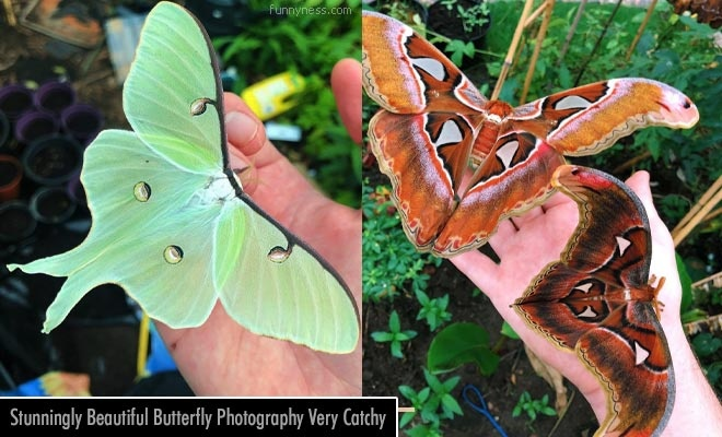 10 surprisingly beautiful butterfly photography never seen before