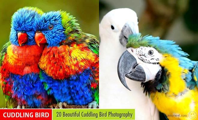 cuddling bird photos