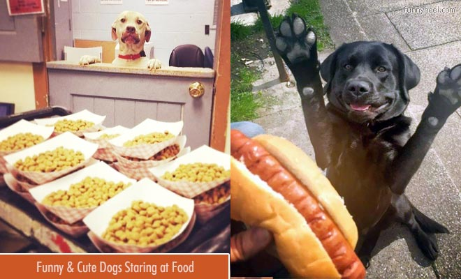 funny dogs staring foods