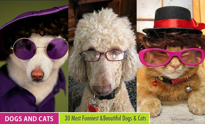 funny dogs with spectacle