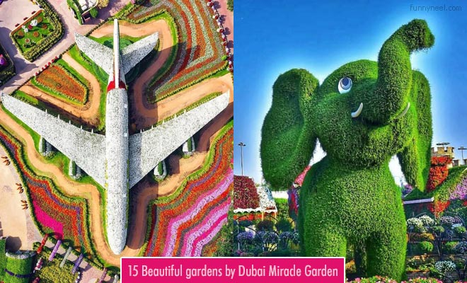 Beautiful Dubai Miracle Garden