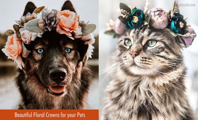 Floral Crowns For Your Pets