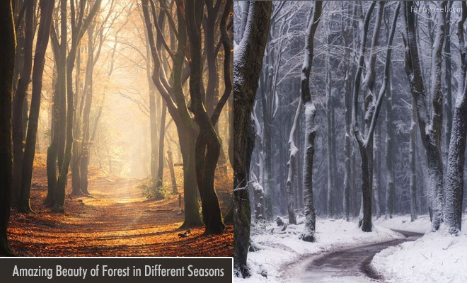 Beauty of Forest In Different Seasons