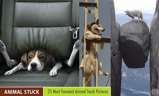 Funniest Animal Stuck Pictures