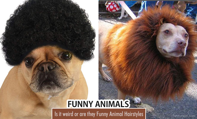 Funny Animal Hairstyles
