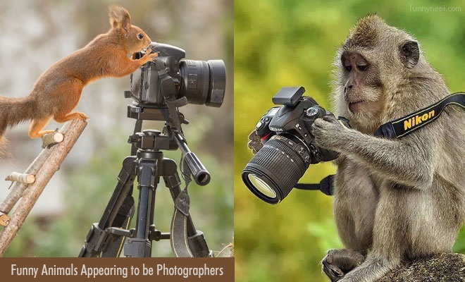 Funny Animal Photographer