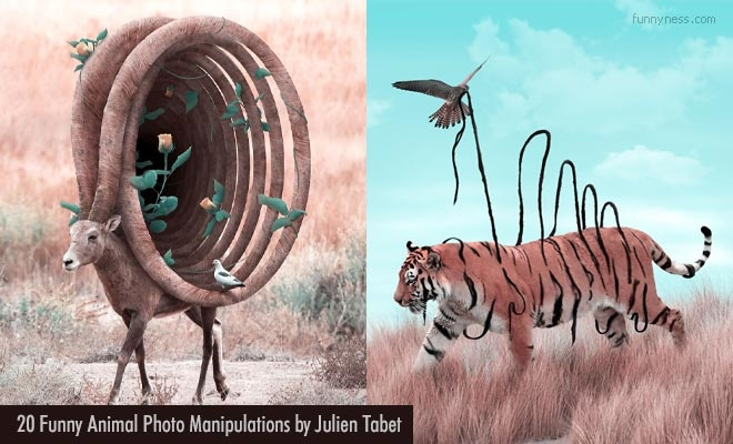 funny animal photo manipulation