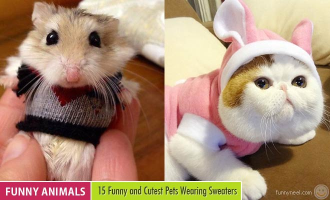 funny pets wearing sweaters