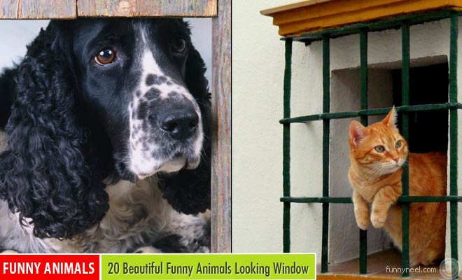 animals looking window pictures
