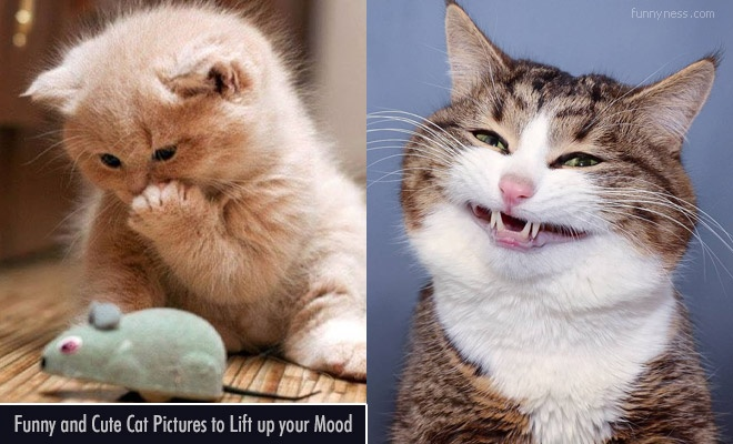15 funny and cute cat pictures to lift up your mood