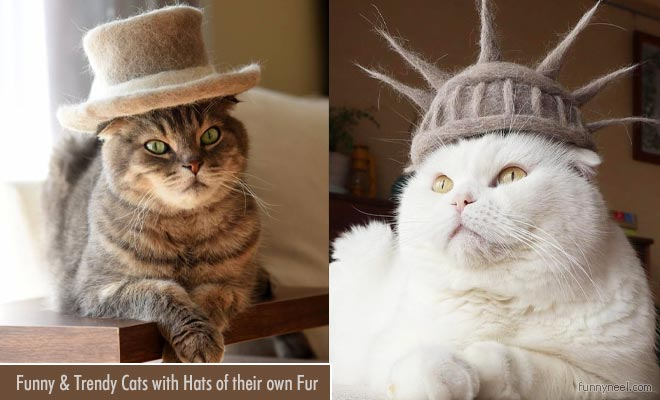 funny cats with hats own fur