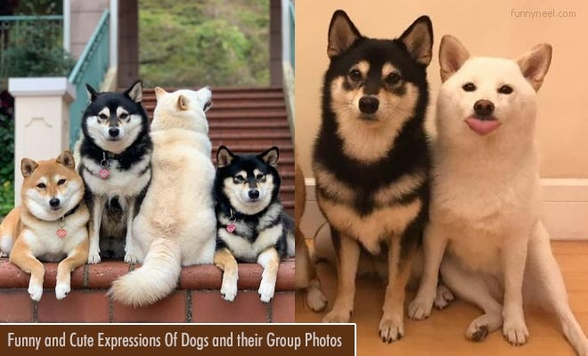 Funny and Cute Dog Expressions