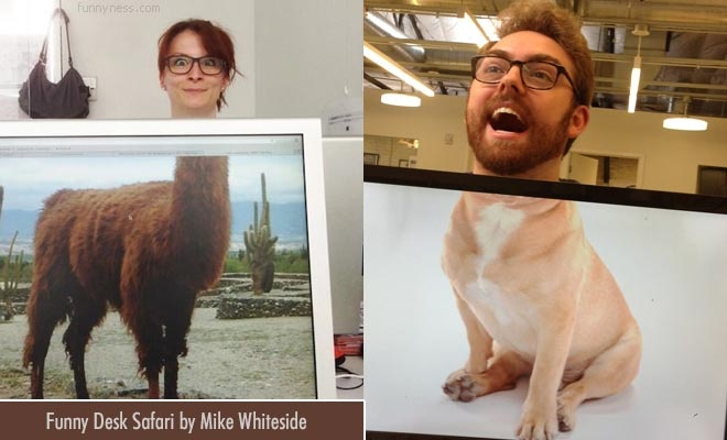 funny desk safari - alignment of animal body with head of co workers by mike whiteside
