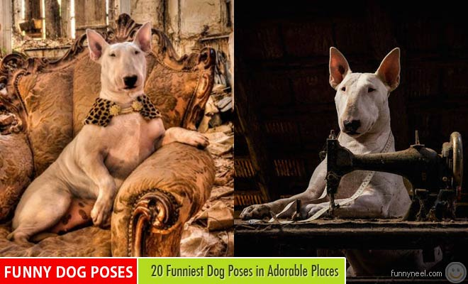 Funny Dog Poses