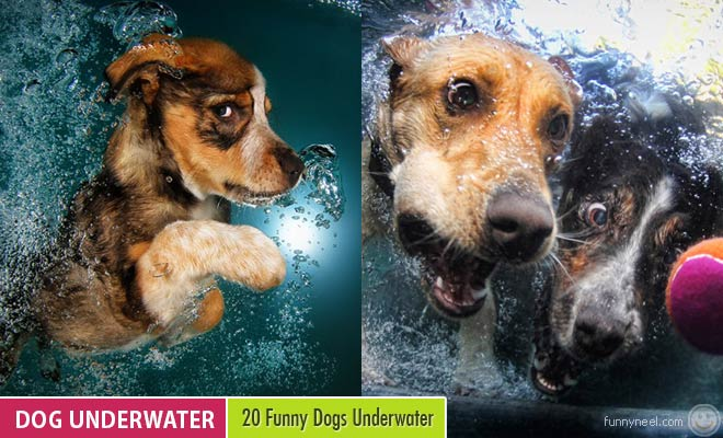 Funny Dog Underwater
