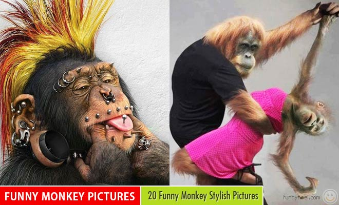 funny monkey pictures