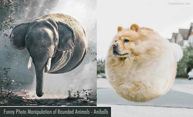 funny photo manipulations of rounded animals - aniballs by aditya aryanto