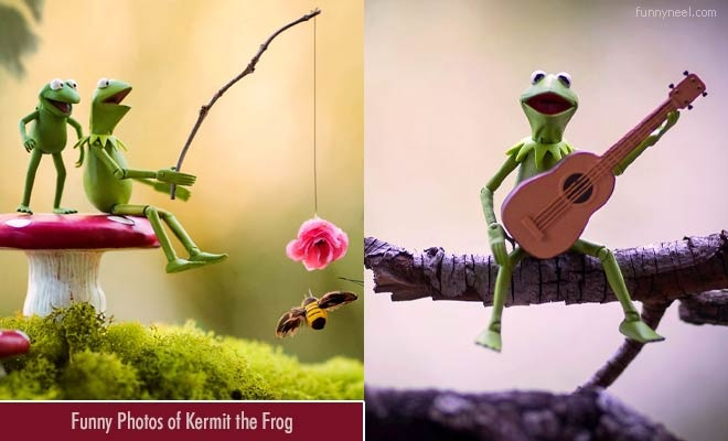 funny photos of kermit the frog by toy photographer mitchel wu
