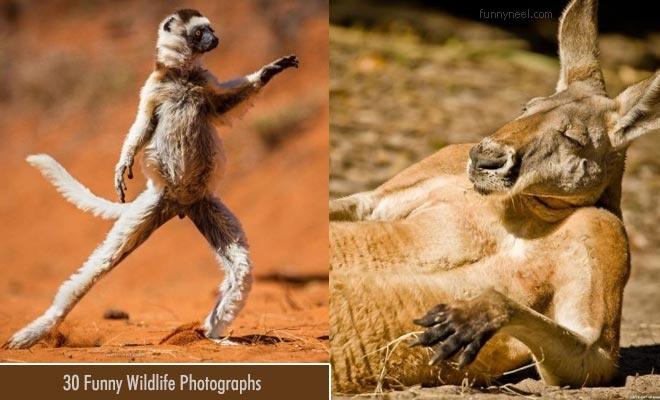 funny wildlife photography