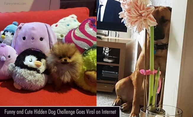 15 funny and cute hidden dog challenge pictures goes viral on internet
