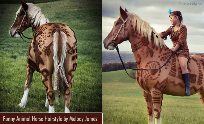 funny horse hairstyles by melody james