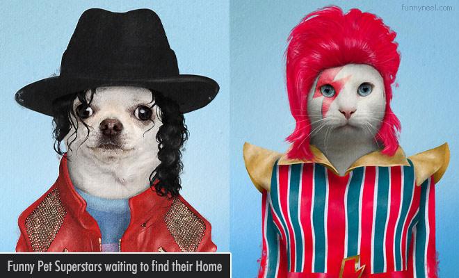 Funny Pet Superstars