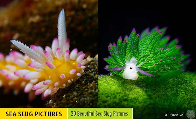 Beautiful Slugs