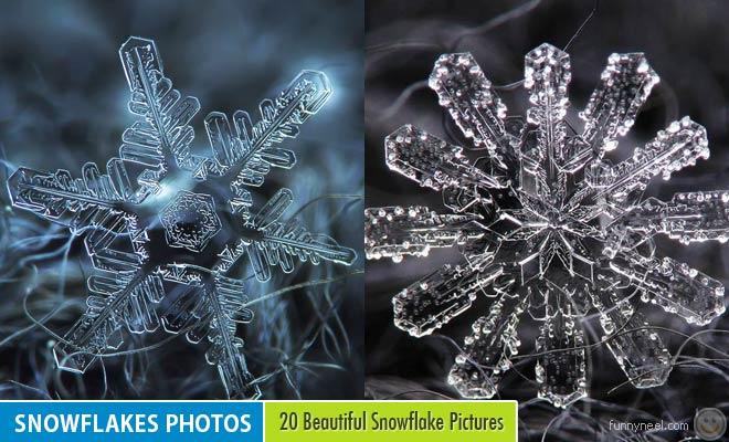 snowflakes photos by alexey kljatov