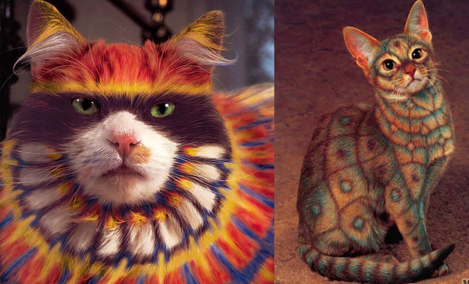 Funny Painted Cat Pictures