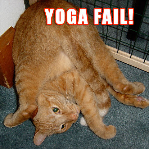 cat fail yoga