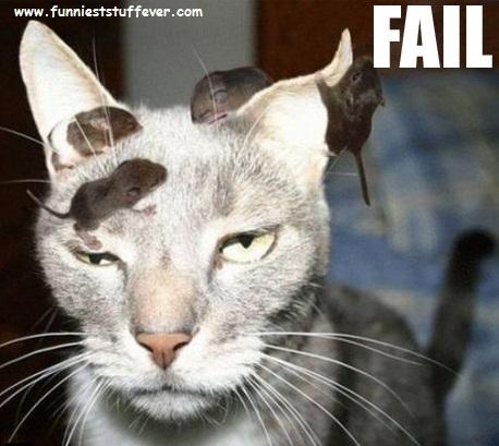 failed cat