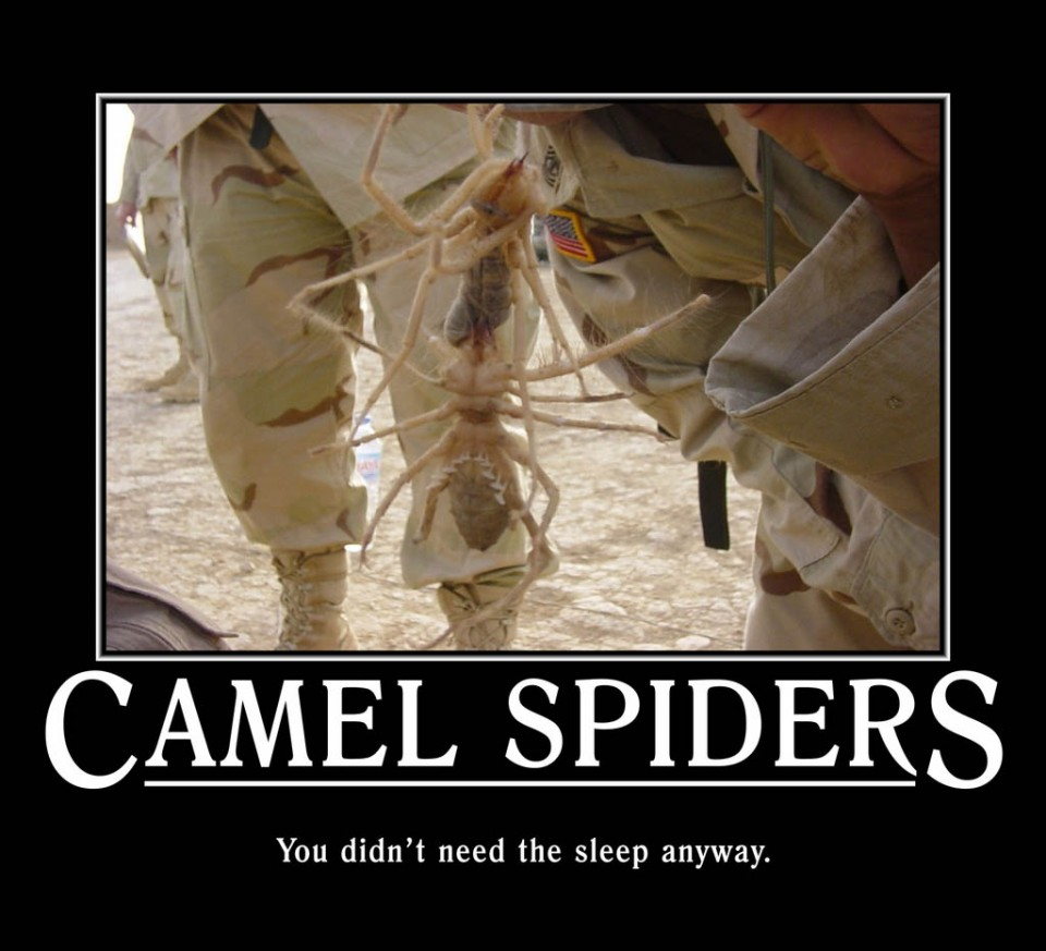 spider funny poster