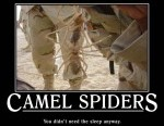 1-spider-funny-poster
