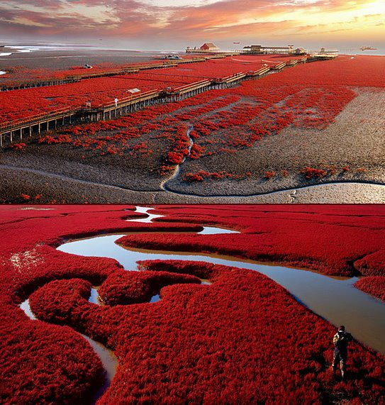 panjin red beach photography