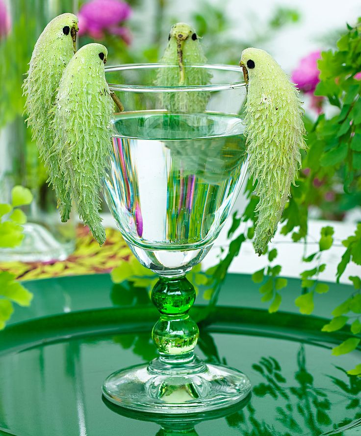 10 these fuits look like parrots funny similar things photography