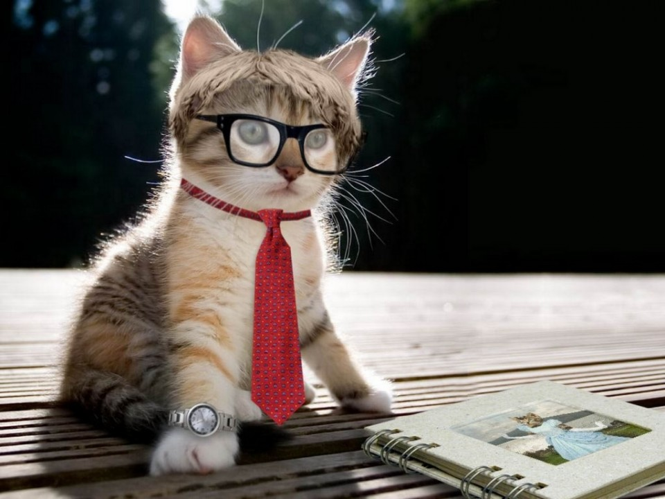 10 tie funny cat photography
