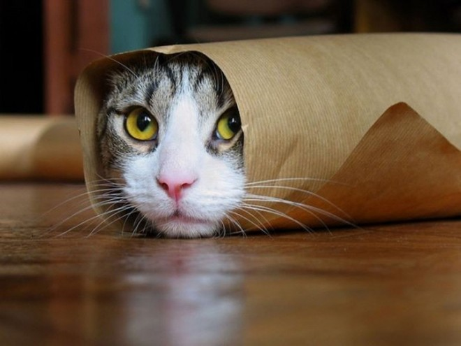 11 paper rolling funny cat photography