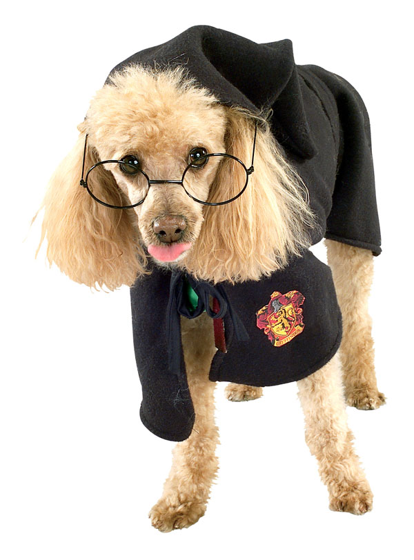 11 witch funny dog costume