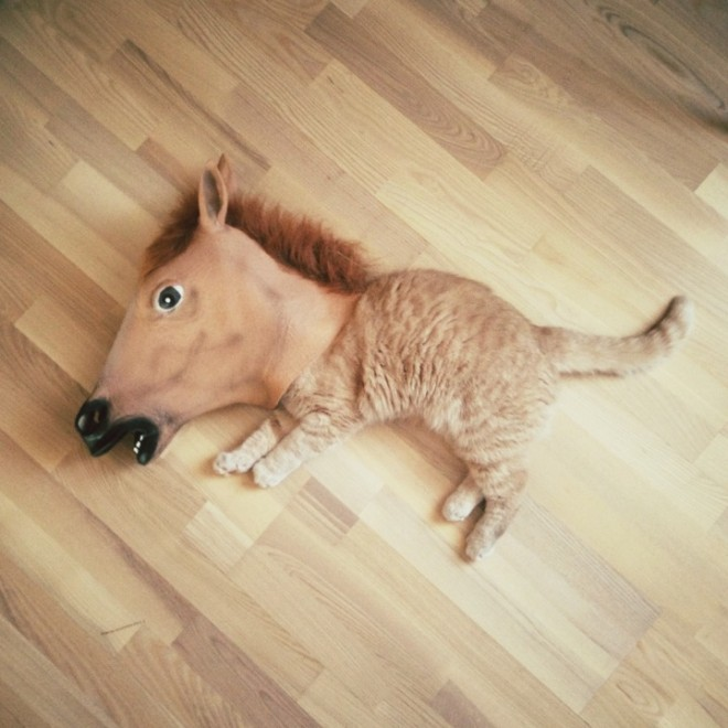 horse mask funny cat photography