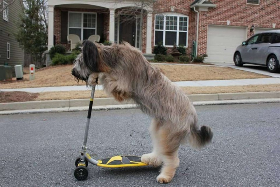 12 scooter dog funny guinness world records