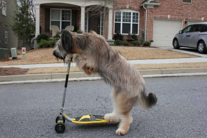 scooter dog funny guinness world records
