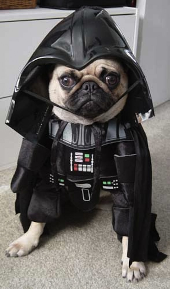 star wars funny dog costume -  12
