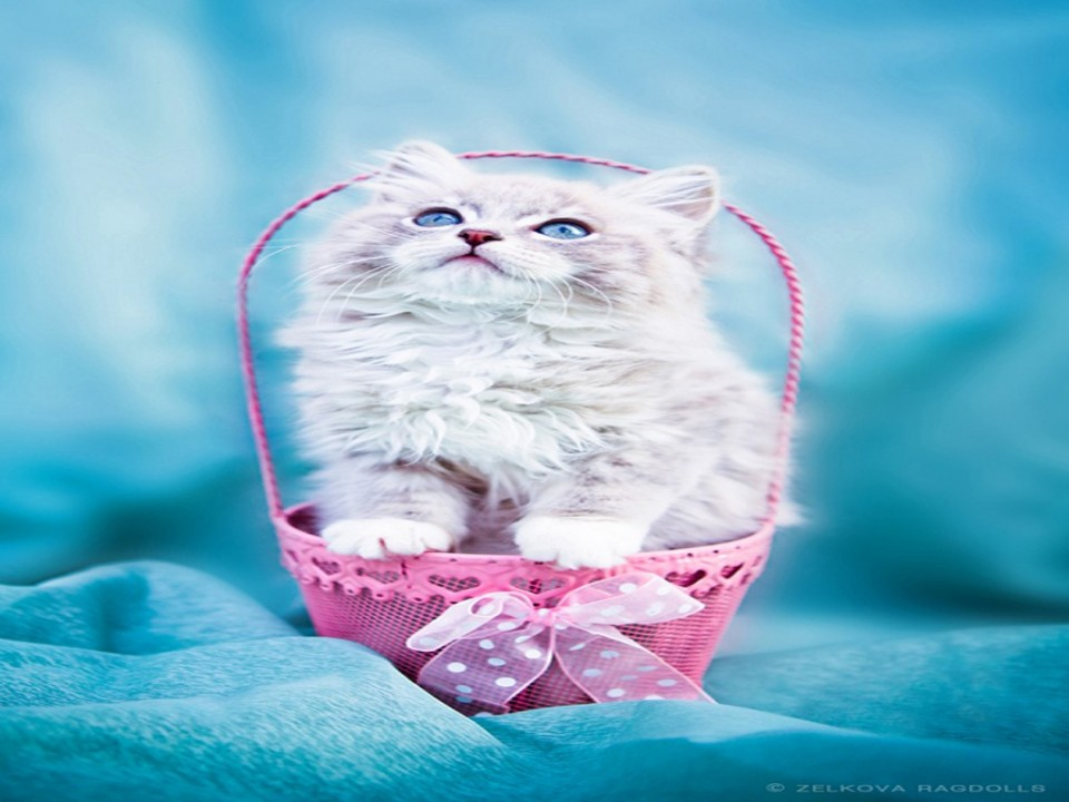 13 basket funny cat photography