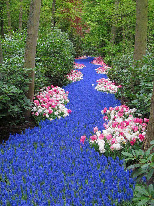 river of flowers photography