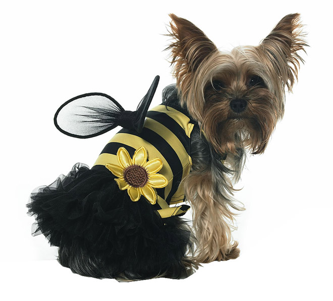 14 bee funny dog costume